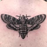 moth -das
