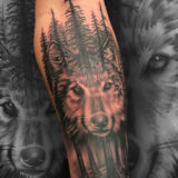 black and grey forest wolf